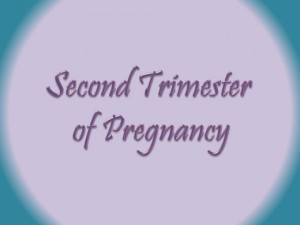 Happy Second Trimester Little One!!!